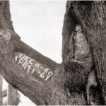 dig tree.3