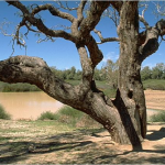 dig tree.4